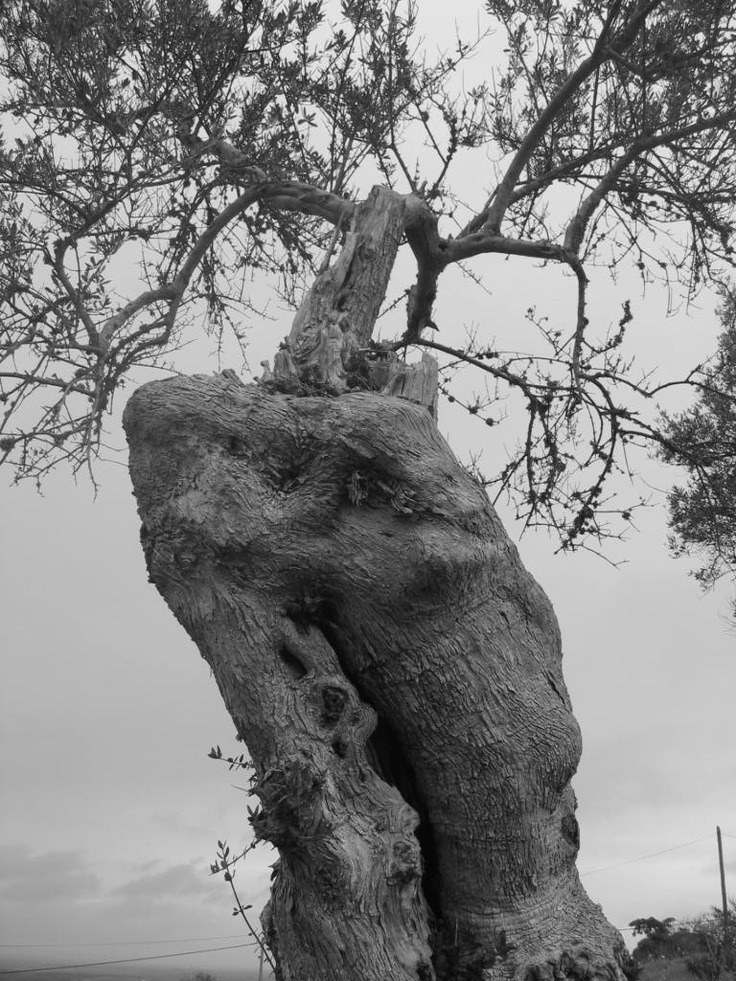 This old tree reminds a sculpture of hands ... Serpa!