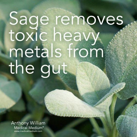 Sage removes toxic heavy metals from the gut.