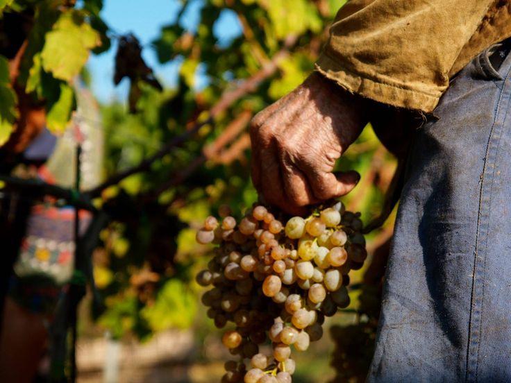 """Il vino è Storia, cultura e tradizione. Quando una bottiglia di vino riesce a  trasmettere tutto questo allora e solo allora si trasforma in un'esperienza esaltante ed educativa. L'esperienza ci ha insegnato che le cose meritevoli """"brillano di luce propria"""", andando oltre a qualsiasi classificazione di sorta."""