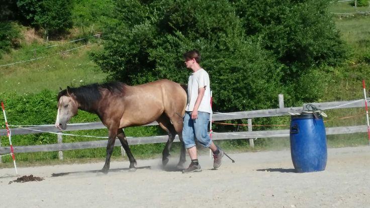 Quarter Horse Liberty a Scaialbengo