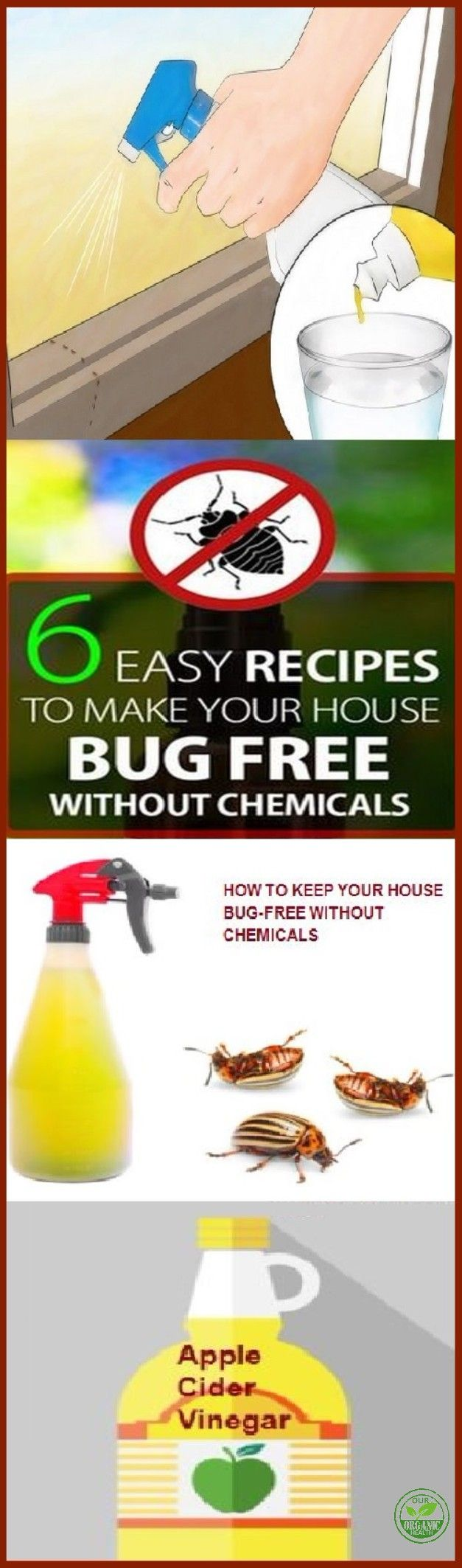 Bugs and spiders are very common everywhere we go. They are even present in our homes. Many people hate to see them, so they just want to eliminate them, but this procedure can be really hard. Luckily for you, in this article, we're going to present you natural ways to eliminate spiders or bugs quickly and effectively.