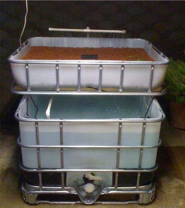 Aquaponics system grow plants above raise tilapia below for Aquaponics fish tank for sale