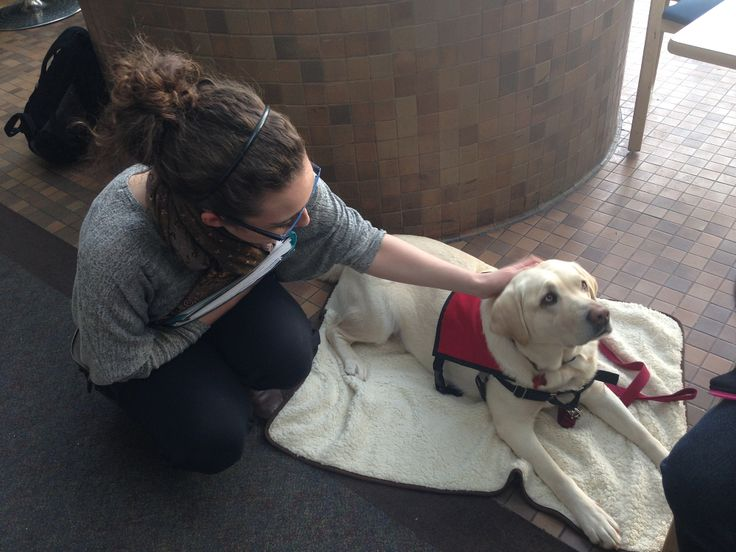 Therapy #dogs help students relax in the NAITrium during Exam Week! #yeg #yegpets #Edmonton#animals