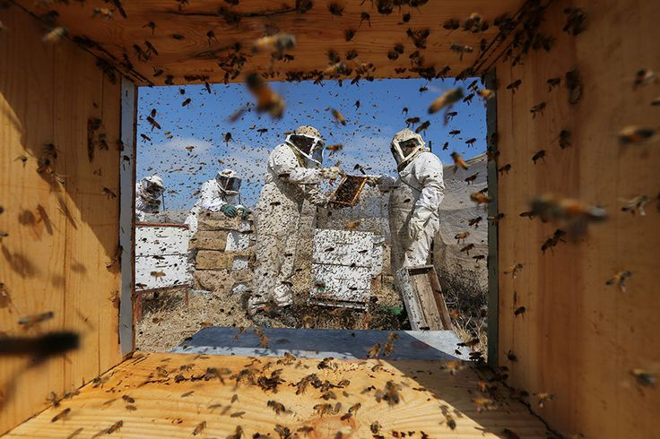 Palestinian beekeepers collect honey at a farm in Rafah in the southern Gaza Strip on Tuesday.