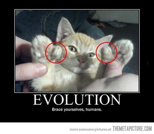 I want a polydactyl cat