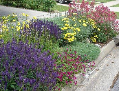 226 best New Mexico Flowers Desert Plants images on Pinterest