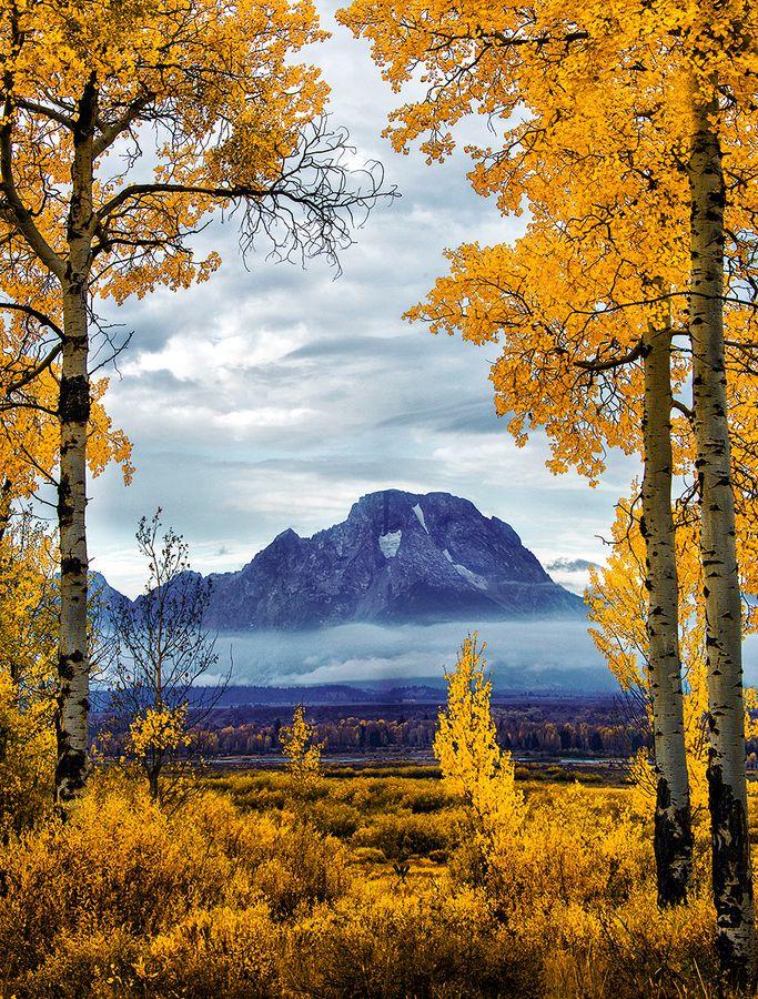 autumn, Moran Aspens, Grand Teton National Park, Wyoming