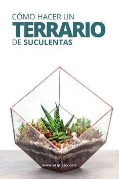 Suculentas Diy, Bonsai, Botanical Gardens, Houseplants, Cactus, Succulents, Gifts, Projects, Color