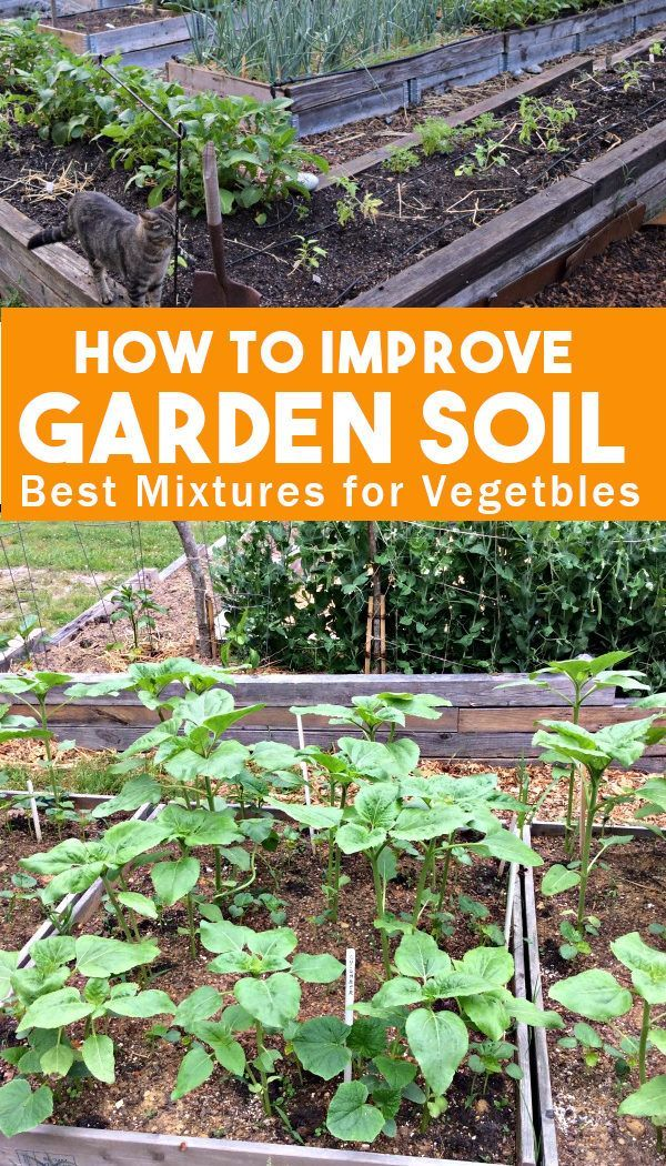 17ca3637f233dd1a40d08ce45df91093 - How To Prepare Georgia Soil For Gardening