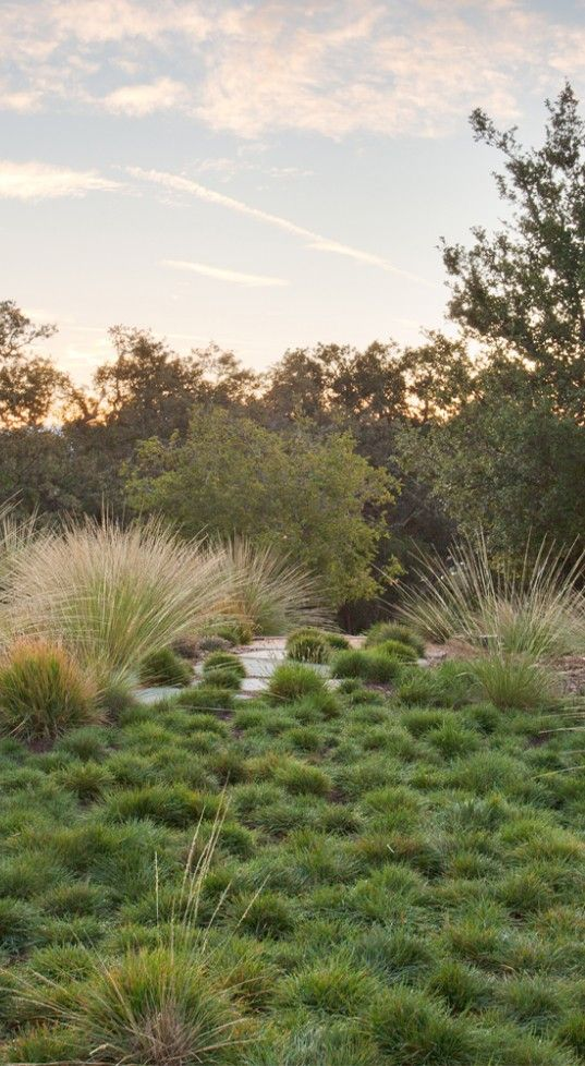Best 20 modern landscape design ideas on pinterest for Wild grass landscaping