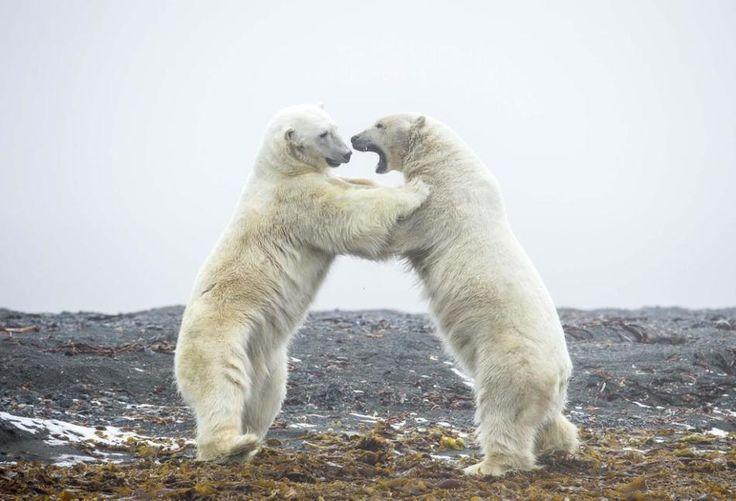 Блог - Царство животных: захватывающие кадры погони, драки и нежных моментов