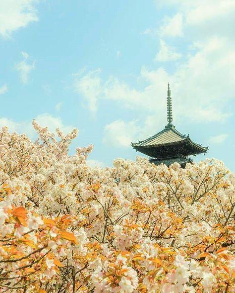 ☆Ninna-ji Temple, Kyoto, Japan, World Heritage, 仁和寺, 京都, 日本, 世界遺産, 桜, sakura, cherry Blossom
