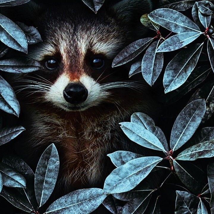 How To Keep Raccoons Out Of Garden 6 Ways Garden Gardening Raccoon Wild Animals Pictures Animals Cute Animals