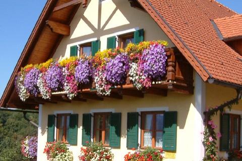 Der Sonnen-Balkon: Blumen für Balkonkästen, Kübel und Co ...