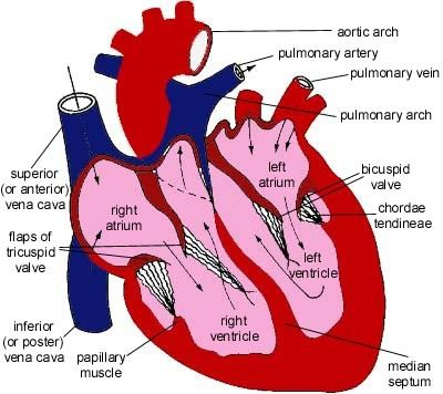 23 best images about Nursing/Myocardial Infarction (MI) on ...
