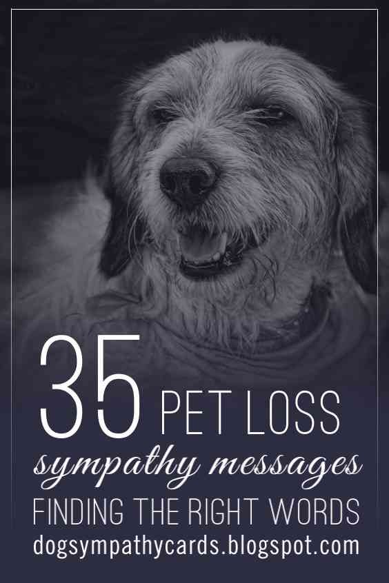 Visit: http://jagifts.us/PetLossSympathyMessages - Pet loss is losing part of one's family.  If you're looking for a wonderful sympathy message to add to card or to express sympathy to another on the loss of their pet, please check out these 35 pet sympathy messages. #petloss #sympathyverses #sympathymessages