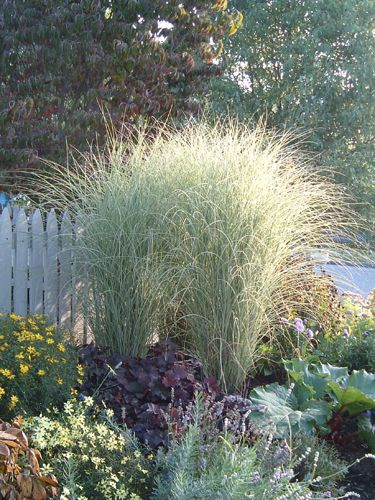 200 best images about ornamental grasses on pinterest for Ornamental grass design