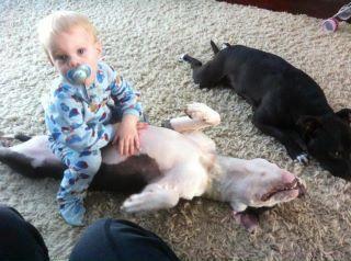 Vicious ;)Nanny Dogs, Heart Pitbull, Animal Abuse, Bullying Breeds, Pit Bull, Abuse Pity, Bull Rocks, Pitbull Furniture, Dogs Lov