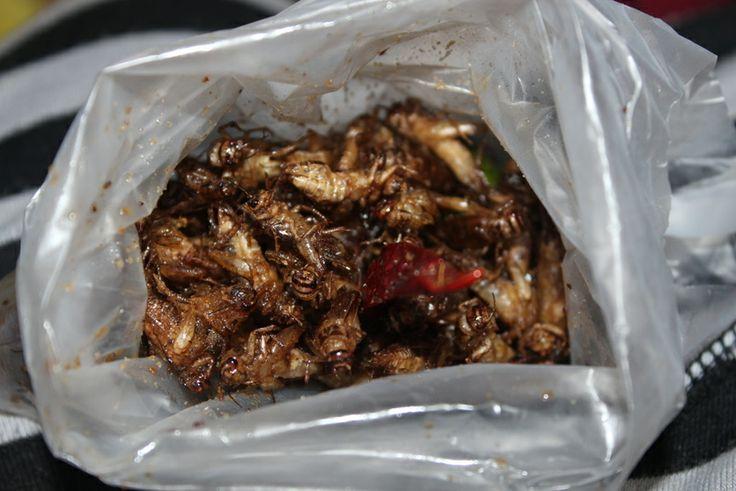 Fried Crickets #thailand