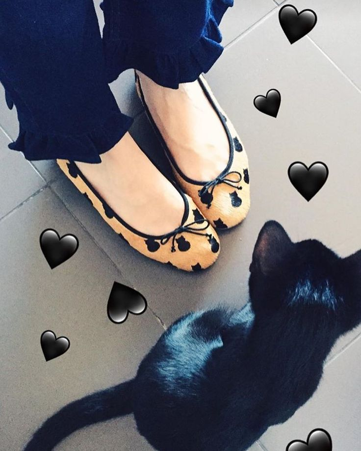 The passion between cats and Josefinas ballet flats is clear 🐱 (📸: From Someone In Love)