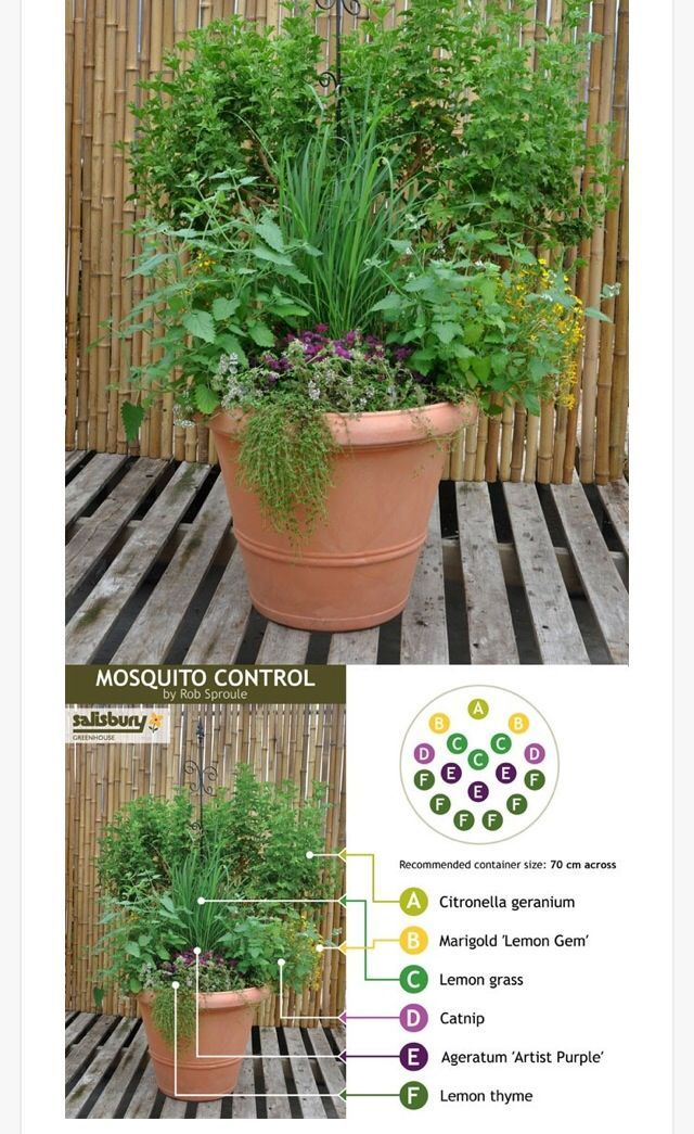 Potted plant assortment for mosquito-control.