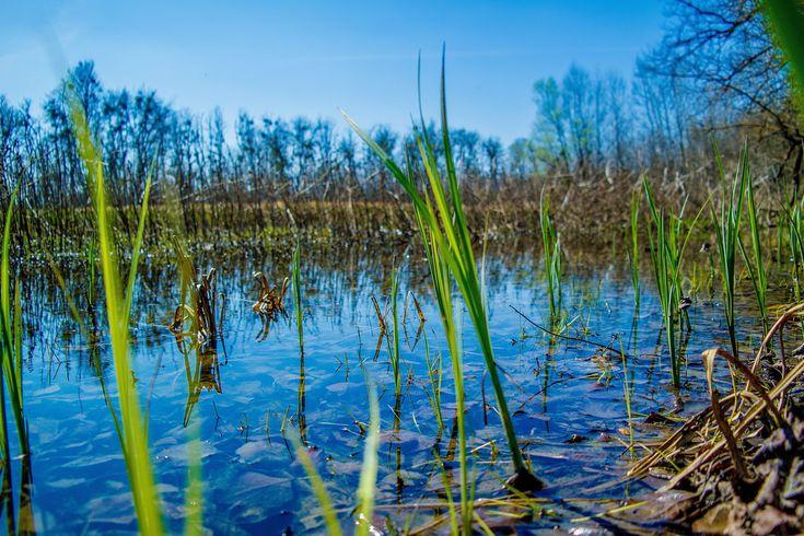 Ébredő természet...Long-erdő természetvédelmi terület,Sárospatak környékén...