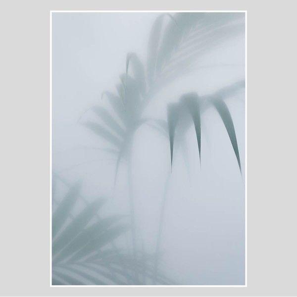 Norr Design Botanic Poster : Palm I 70x100cm