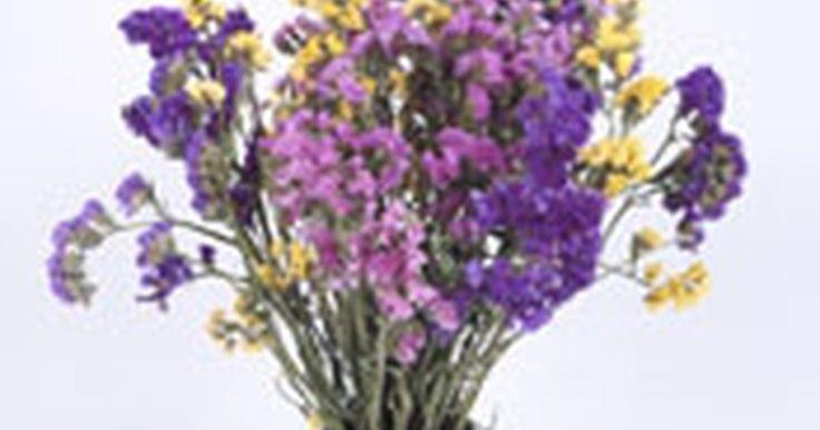 Cómo secar flores de lavanda. Cómo secar flores de lavanda. Es bueno tener flores secas durante los meses de invierno. Estas agregan color a un cuarto oscuro y también pueden usarse para crear proyectos de manualidades florales. Cosecha las flores de lavanda que crecen en tu jardín, o cómpralas en ramos en tu mercado de flores para que tengas suficientes a la mano.