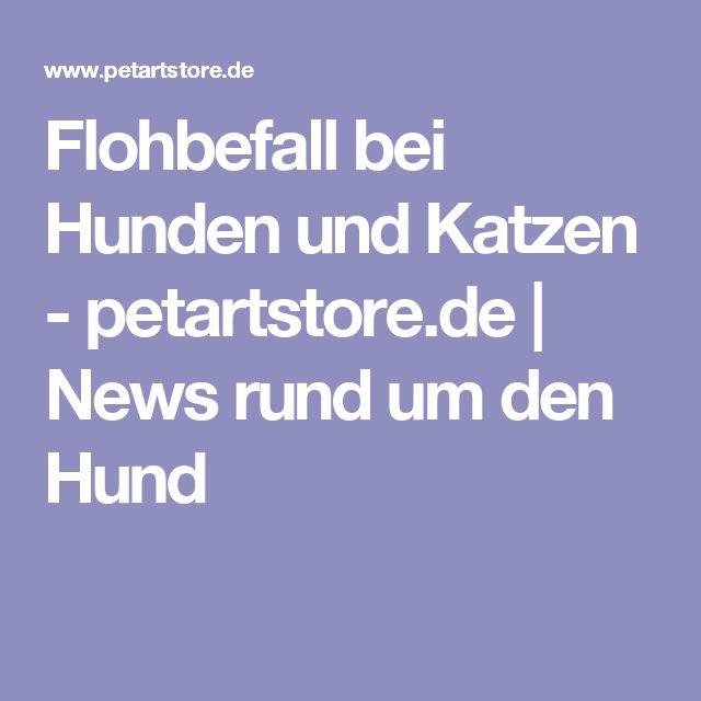 Flohbefall bei Hunden und Katzen - petartstore.de | News rund um den Hund