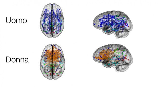 Le reti di connessioni cerebrali nel cervello dei maschi (in alto) e in quelle donne (in basso): in blu sono visibili i collegamenti all'interno dello stesso emisfero, in arancione quelli tra un emisfero e l'altro. Image credit: M. Ingalhalikar  et al./PNAS