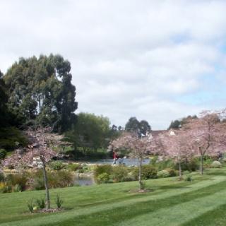 Sakura festival, International Pacific College, Palmerston North New Zealand
