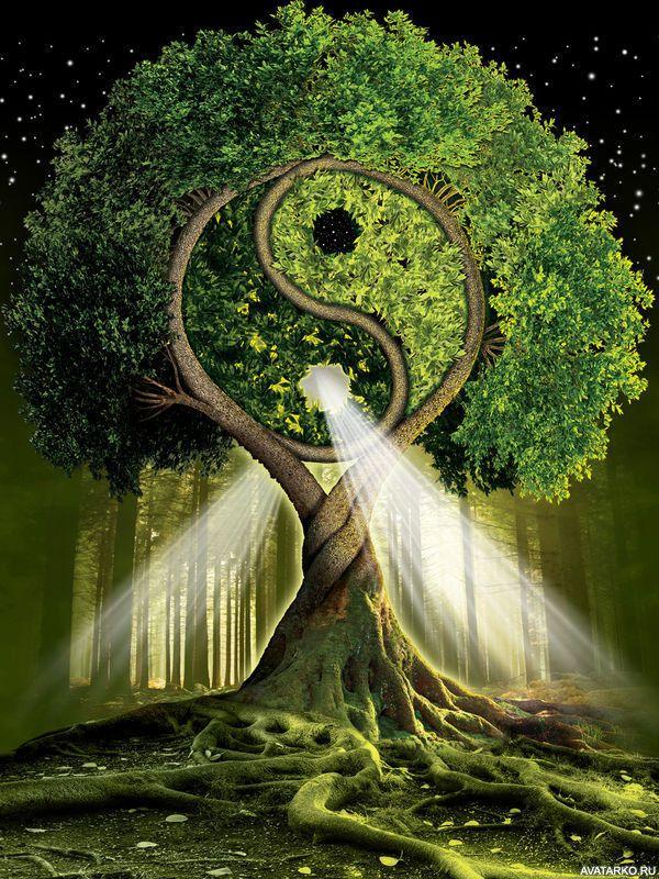 певец энергия дерева картинки собранной