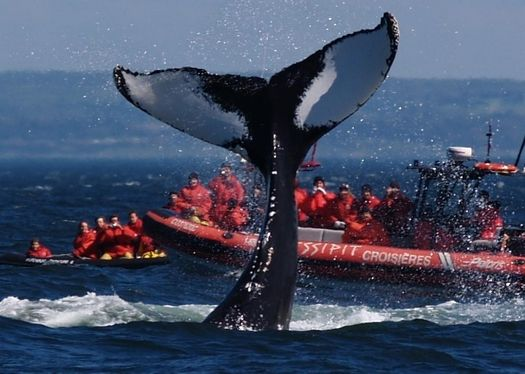 Whale watching in Tadoussac, Quebec, Canada