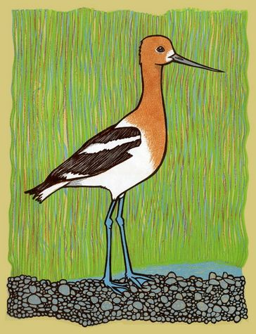 American Avocet art print by Leia Bell $25