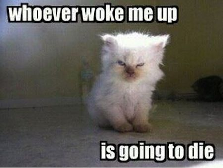 Funny cats.... For more funny cat quotes visit www.bestfunnyjokes4u.com/lol-funny-cat-pic/