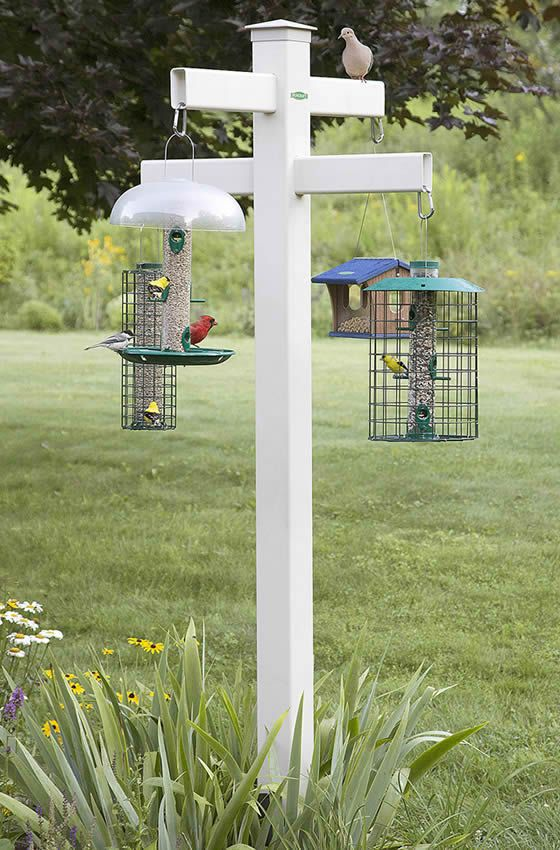 25 best ideas about bird feeder poles on pinterest for Bird feeder pole plans