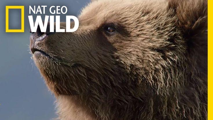 Explore the Grizzly Empire | Destination WILD