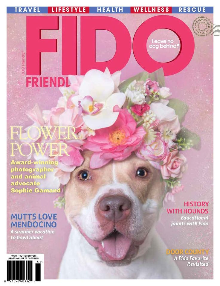 Image result for fido magazine pitbull cover