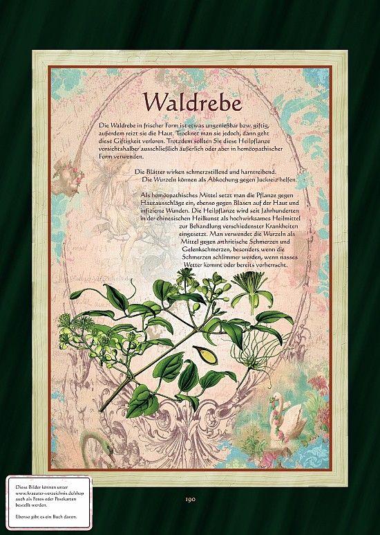 Waldrebe                                                       …