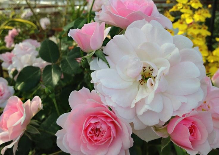 Spring's flower in green park if Fukuoka