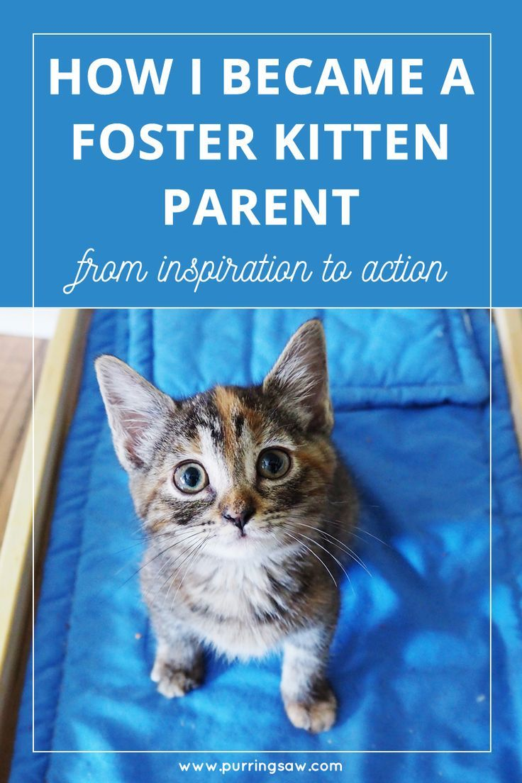 Pin This And Tap To Read Here S How I Became A Kitten Fostering Parent I Begin A Blog Series On My Experience Being A F Foster Kittens Cat Care Cat Advice