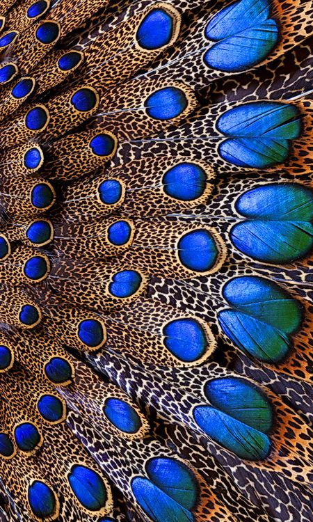 peacock feathers #birdandknoll
