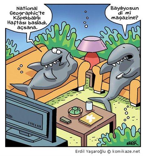 Neden olmasın, yüzünüzde gülümseme oluşturabilmesi dileğimle. :) #Karikatür #HayvanlıKarikatür