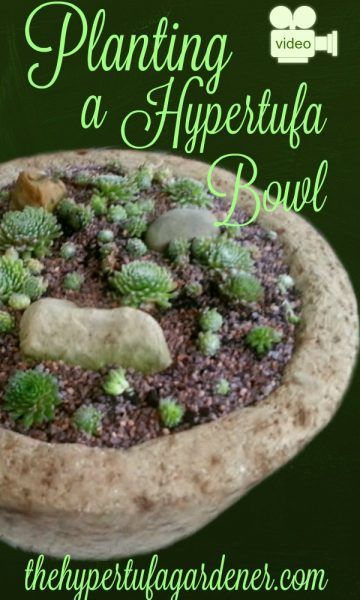 Planting A Hypertufa Bowl via @hypertufagarden || I made this large bowl a few weeks before filming, and it is natural Portland Cement mix with no added color. I use Vermiculite which is a brownish color as opposed to Perlite which is white. I think that may give it the more tan result. I prefer the brownish color for some reason. It just seems more appealing to me. Do you have a preference?!!