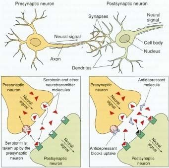 Neurotransmitters are chemical messengers secreted by neurons that activate an adjacent cell. Neurotransmitters are secreted into a synaptic cleft, rather than into the bloodstream.