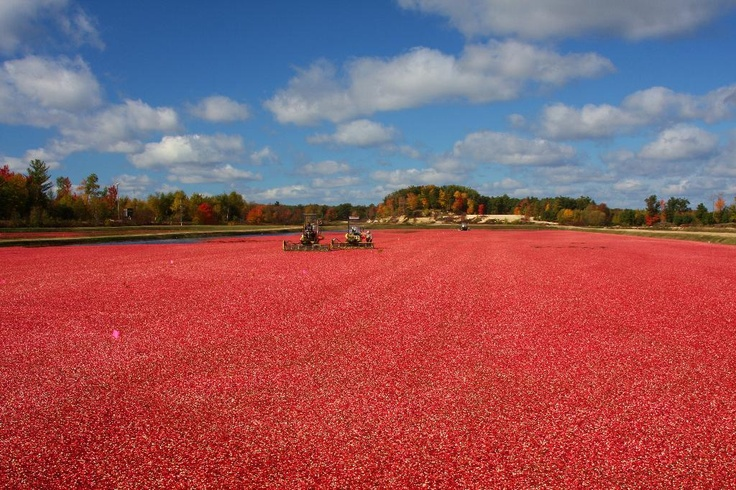 Jackson County, Wisconsin Cranberry Harvest