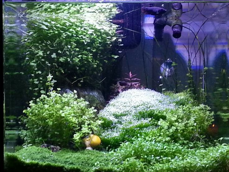Planted Aquarium powered by SICCE - MINU' Led lighting system