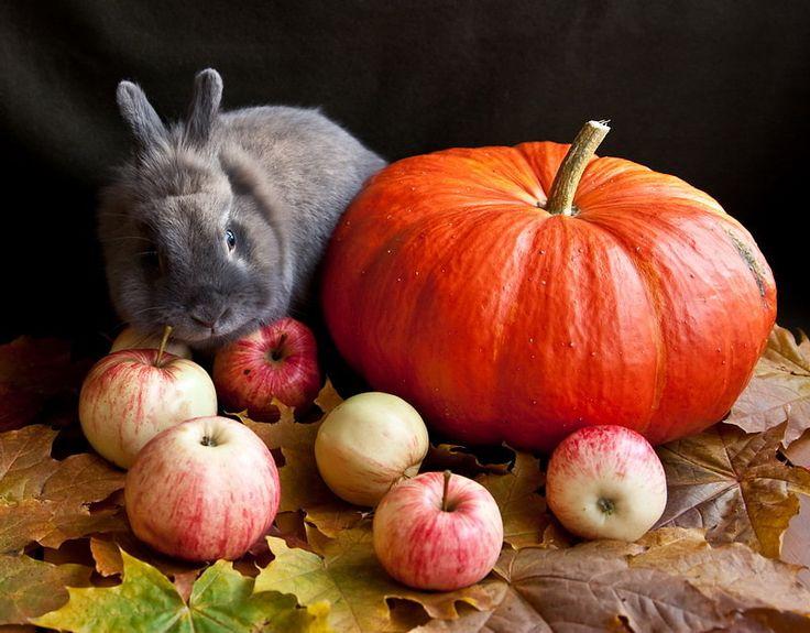 Осенний натюрморт с кроликом