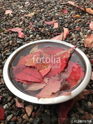 "Download the royalty-free photo ""Autumn concept"" created by Ciaobucarest at the lowest price on Fotolia.com. Browse our cheap image bank online to find the perfect stock photo for your marketing projects!"