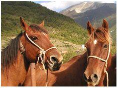 IL #CAVALLO DEL CATRIA. Il cavallo del Catria prende il nome dall'area di origine, il massiccio del monte Catria nel comune di Cantiano, nella regione Marche. La sua origine è molto antica: se ne trovano tracce già dopo l'anno 1000 in alcuni documenti che citano la presenza di allevamenti di cavalli a... Per continuare a conoscere la razza: https://itunes.apple.com/it/app/vademecum-del-cavallo-secondo/id765697733?mt=8&uo=4 Grazie.
